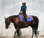Riding Lessons by Circle T Training